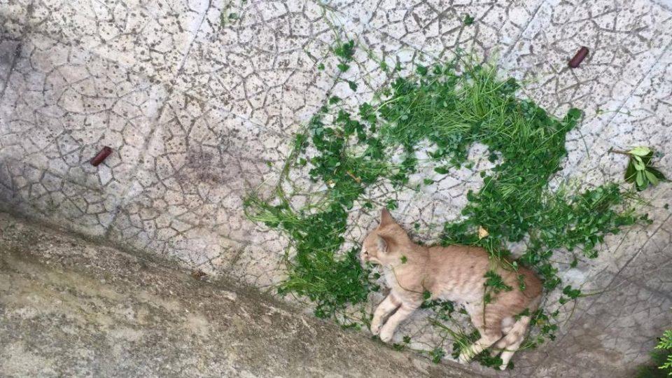 gatto_morto5.jpg