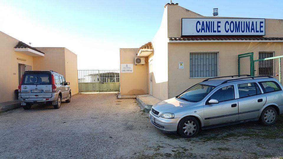 Canile-comunale-ok.jpg