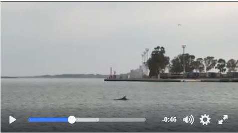 Delfini-nel-porto.jpg