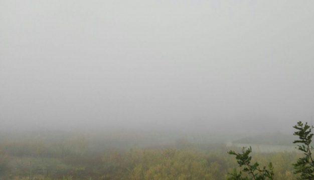 nebbia.jpg