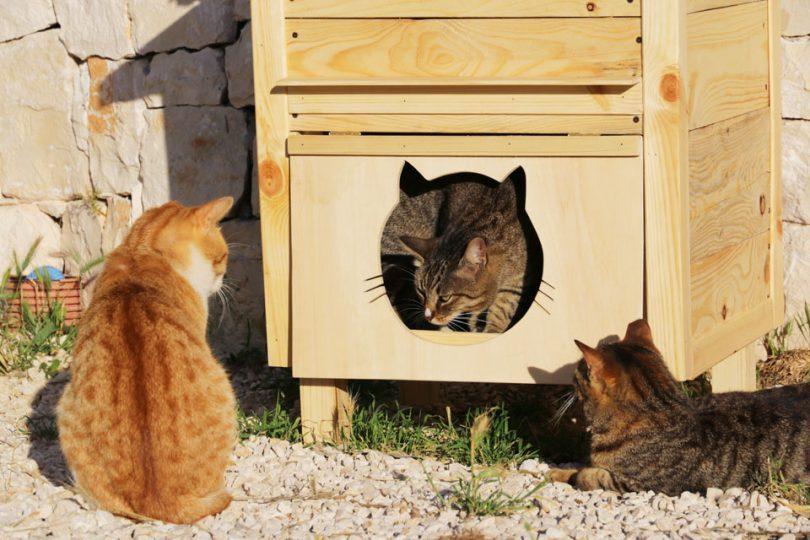 gatti-1.jpg