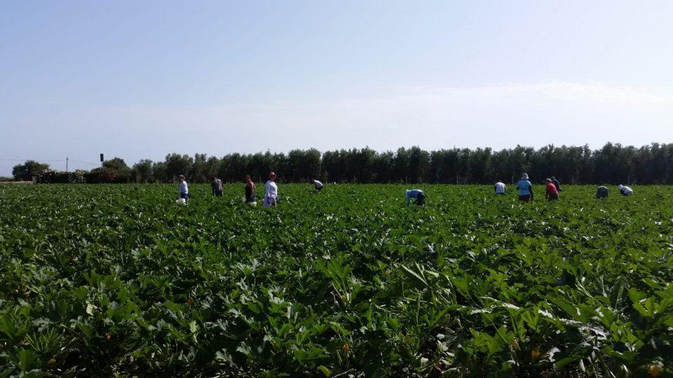 campagna-agricoltura-.jpg