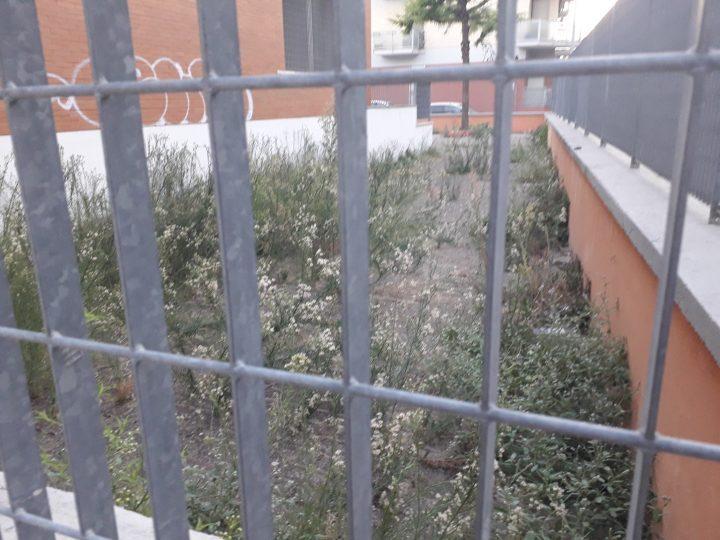 SCUOLA-DEGRADO.jpg