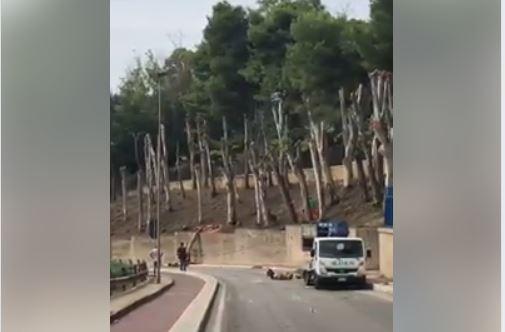 alberi-lungomare.jpg