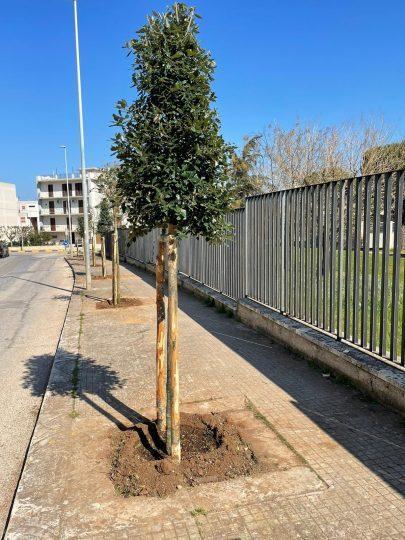 alberi3.jpeg